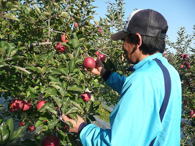 青年部の藤田さん 自身の果樹園にて